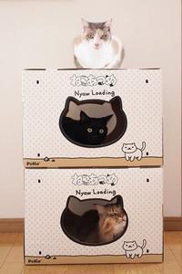 映画「ねこあつめの家」観てきました!  - きょうだい猫と仲良し暮らし