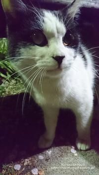 若猫野良さん - 猫花雑記