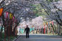 日岡山の桜 ⑫ - グル的日乗