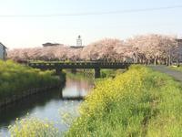 春色 - 桂建設の日々ブログ