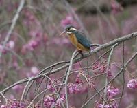 なかなか咲かない - 鳥撮りに行こう!(ついでにあれもこれも)