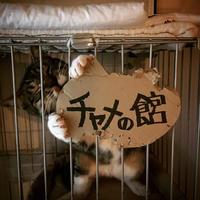 体重測定(2017年4月)〜ファミ吉 その後3〜 - NEKO LOG 別館「パーマン猫と申します」