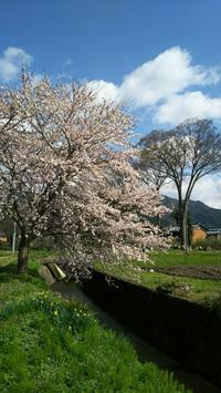 名もなき場所のSAKURA~滋賀県① - Emily  diary