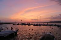 湖と空花と咲く春の夕、歯医者30周年記念無料診察 - ペルージャ イタリア語・日本語教師 なおこのブログ - Fotoblog da Perugia