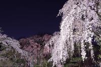 中院 枝垂れ桜 3 - photograph3