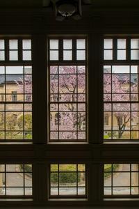 京都府庁旧本館の桜 - 鏡花水月