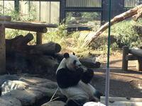 (台東名所)東京都恩賜上野動物園 / Ueno Zoological Gardens - Macと日本酒とGISのブログ