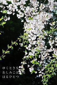 奈良春色3 - 螺子花便り