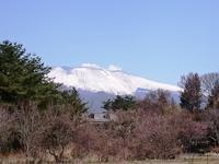 春の兆しで汗だくの日 - 浅間山眺めてほのぼのlife~花だより♪