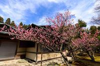 梅咲くしょうざん庭園 - 花景色-K.W.C. PhotoBlog