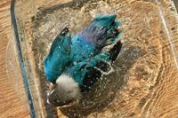 水浴びB.Bの記録 → (4月5日)+(お花遊びの後で♪・4月13日) - FUNKY'S BLUE SKY