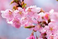 春の花 -2- - ◆Akira's Candid Photography