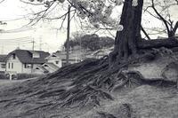 木のネッコ - Vivid Image
