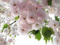聖土曜日 Holy Saturday 。。。Have a good Easter Week。*。:☆.。† - 代官山だより♪