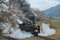 桜はまだかいな?〜SLやまぐち号〜 - 蒸気をおいかけて・・・少年のように