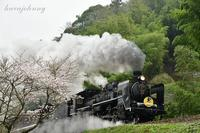 爆汽笛に桜もびっくり~SLやまぐち号~ - 蒸気をおいかけて・・・少年のように
