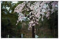 散歩長岡京-37 - Hare's Photolog