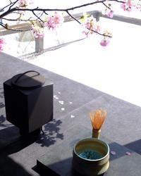 坂井直樹氏の茶釜でお茶時間 - カエルのバヴァルダージュな時間