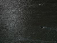 川縁の散策にて - M2_pictlog