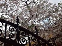 桜週間 - ないものを あるもので
