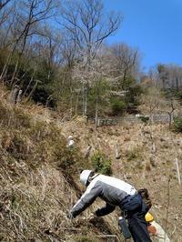 10年先も山作業ができる体力があることを信じて、桜の下でクヌギを植える - 大屋地爵士のJAZZYな生活