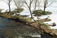 水の温まぬ春の小川とスカルラッティのソナタ - 照片画廊