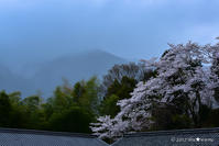 一躍の春:4:動と静 - walk with my Camera