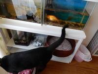 水槽用棚 - 愛犬家の猫日記