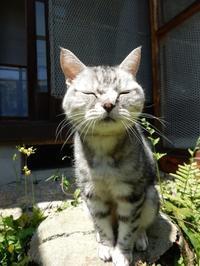 草取り合間に華ちゃんと戯れ、ワンプレート晩酌セット - ご機嫌元氣 猫の森公式ブログ