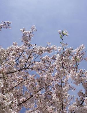 春。されど心は奈落 - ゆら~りくら~り