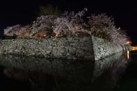 徳島城公園の夜桜 - ブナの写真日記