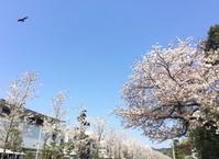 鎌倉心景「花語り」 - 海の古書店