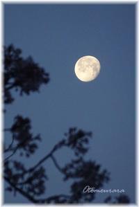 さくらと と お月さま と お日さま - 日々楽しく ♪mon bonheur