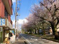 美容院の前の桜 - Lucky★Dip666-Ⅲ