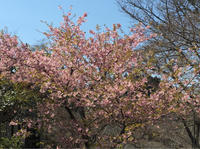 吉野の里の桜にはまだまだ早すぎましたが - 腹ペコ旅行記