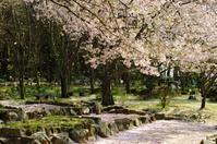 光のどけき春の日に - kenihの部屋 (流浪する魂)