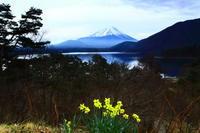 29年4月の富士(12)本栖湖の富士2 - 富士への散歩道 ~撮影記~