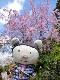 なんちゃって京都 - ぶうぶうず&まよまよの癒しの日記