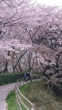 とりあえず桜を見たよ - 気づいたことを残したいだけ。