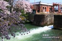 岡崎疎水沿いを行く5 - 写楽彩