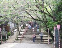 大村さんぽ♪ 玖島城跡の桜まつり - うふふの時間