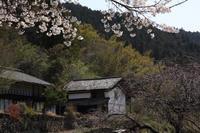 山里の名も無き桜  - 風の彩り-2