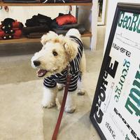 Hello Annco !! - Doggie Do!! / good dog and hello cat !!