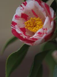 我が家の庭の花達 - きまぐれ花旅
