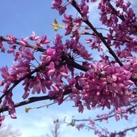 とっても短い春 爛漫 - 幾星霜Ⅱ