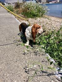 ターシャ近況 - 湖畔に暮らすミュージシャンと愛犬ハンク/ターシャの日記