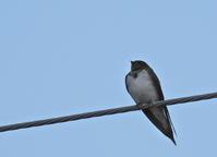 早朝の鳥たち - ぼくの写真集2・・・Memory of Moment