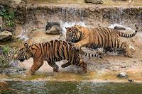 水辺の追いかけっこ - 動物園放浪記