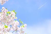 桜  - みなかわ写瞬間
