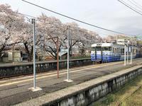 電車と桜と - ビール片手に